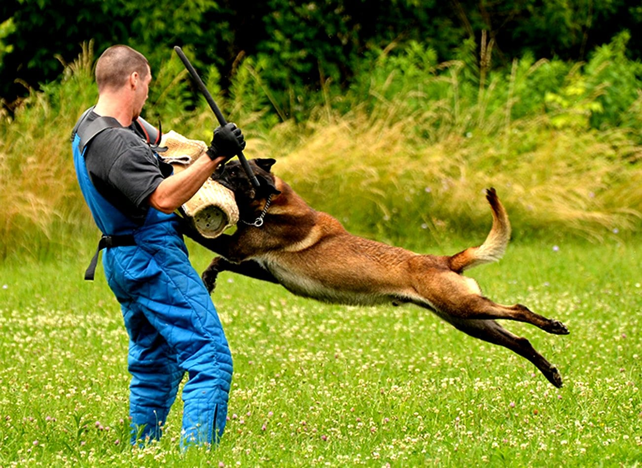 man vs dog chien attaque budapest activites vimigo